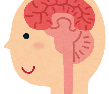 糖質制限中の脳への影響は?脳のエネルギーの必要量と思考力低下や萎縮するのは本当?
